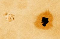 NOAA 10673, tache solaire